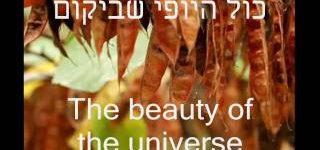 היופי שביקום